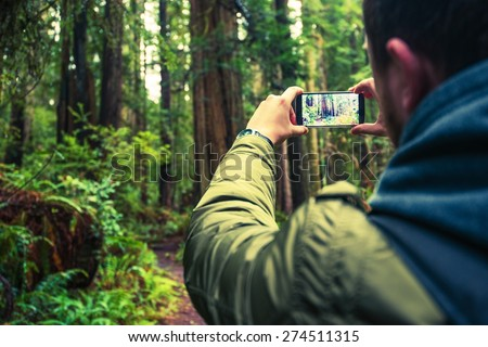 Taking Pictures Using Mobile Phone. Mobile Photography. Tourist Taking Picture of the Redwood Forest in Northern California, United States. - stock photo