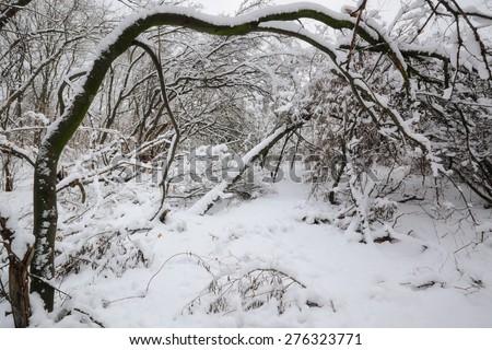 tales winter trees on snow in ukraine - stock photo