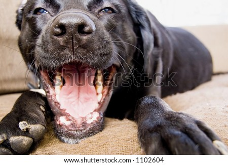 talking dog - stock photo