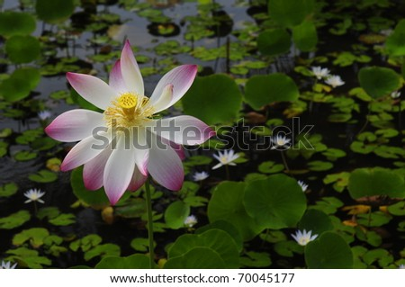 Tall Flower - stock photo