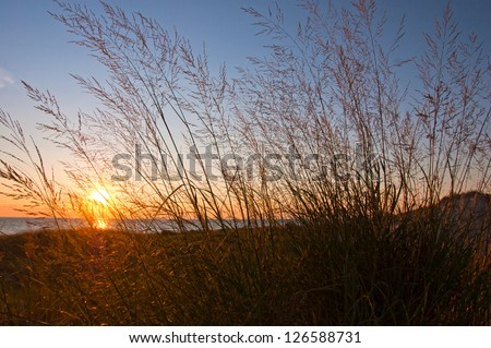 Tall grass in sand dune by water with low, dramatic sunlight