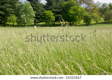 Tall Grass Meadow with Trees in Background - stock photo