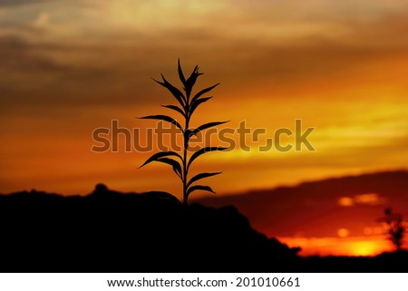 tall grass silhouette. Perfect Tall Tall Grass Silhouette At Dramatic Golden Sunset Intended Grass Silhouette N