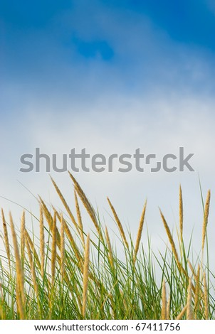 tall green bush blue sky and some cloud the image is saturated - stock photo