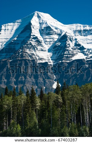 Tall green coniferous and decidious trees in front of a snow peaked Mount Robson mountain in British Columbia, Canada. - stock photo