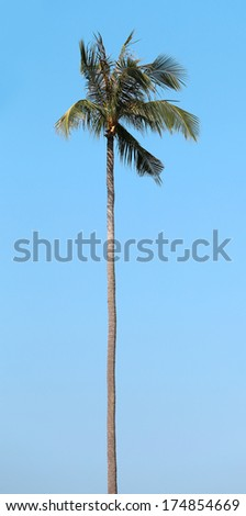 tall palm against the blue sky