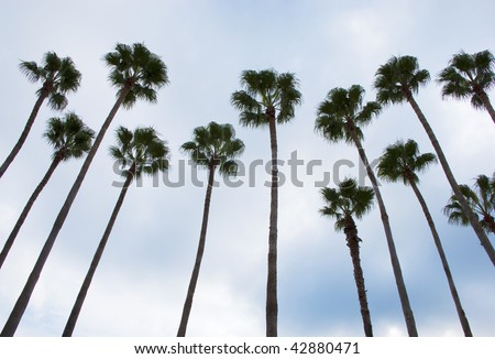Tall palm tree silhouettes against a cloudy sky
