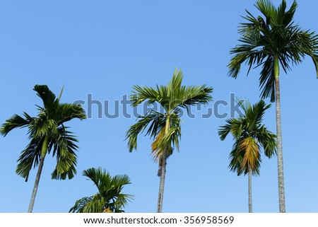 tall palm tree with blue sky background