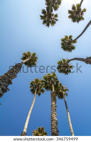 Tall palm trees from below in California, USA - stock photo