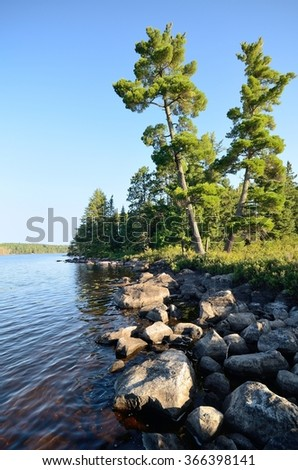 Tall Pine Trees By A Wilderness Lake - stock photo