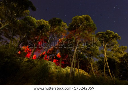 tall pine trees with red light coming from above  - stock photo