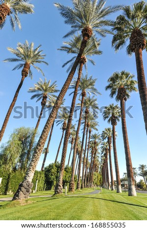 Tall rows of palm trees line a walking path - stock photo