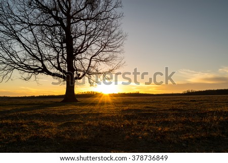 tall tree in the meadow at the sunset