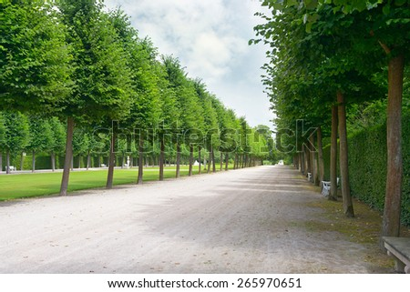 Tall trees along the footpath in park - stock photo