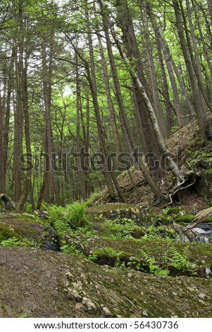 Tall trees and lush green foliage are part of the landscape at Tillman's Ravine, Stokes State Forest in New Jersey. - stock photo