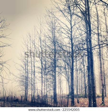 Tall trees fenced off against a grey cloudy sky. - stock photo