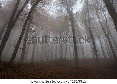 Tall trees in the autumn forest in the fog - stock photo