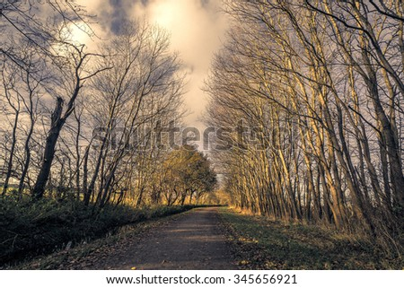 Tall trees without leaves by a nature road in the late autumn - stock photo