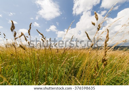 Tall wild grasses flutters in the wind in rural meadow  - stock photo