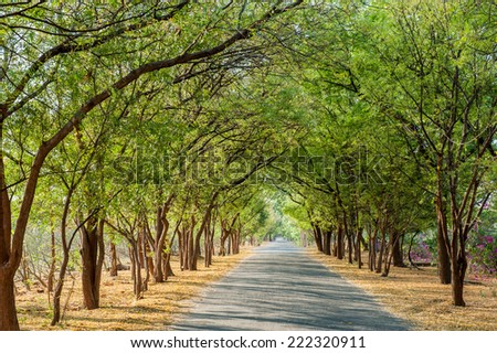 tamarind tree stock images, royaltyfree images  vectors, Beautiful flower