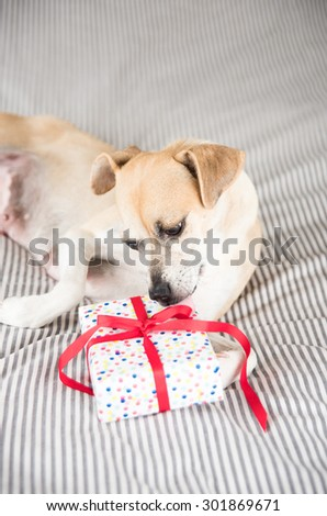 Tan Colored Terrier Mix Dog Happy to Receive Present - stock photo