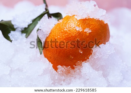 tangerine citrus in snow winter christmas new year holiday cold - stock photo