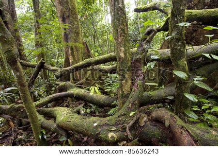 Tangle of fallen branches on the rainforest floor in Ecuador