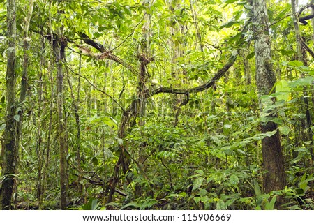 Tangle of lianas in the rainforest understory, Ecuador - stock photo