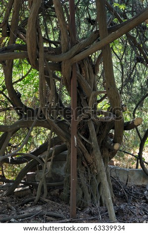 Tangled tree branches in abandoned garden. - stock photo