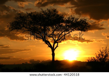 Tarangire National Park - Wildlife Reserve in Tanzania, Africa - stock photo
