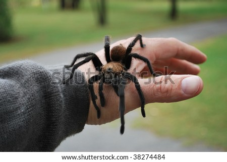 Tarantula Hand - stock photo