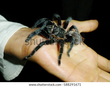 facing fears of spiders Don't waste anymore time running from your fears – face them and heal it's time to take control of your fear of spiders and live an easy going life free of.