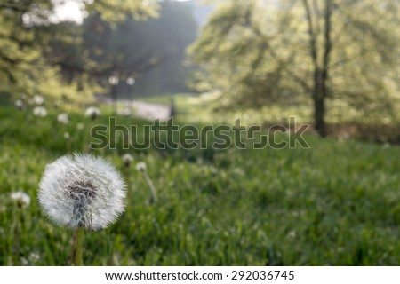 Taraxacum  is a large genus of flowering plants in the family Asteraceae  dandelion - stock photo