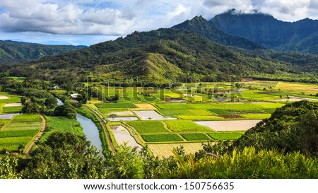 Taro fields in beautiful Hanalei Valley, Kauai. - stock photo