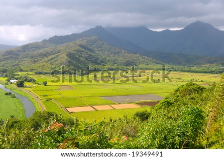 Taro fields in Kauai, Hawaii, in sunlight under lowering clouds