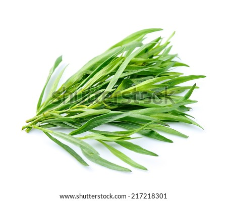 Tarragon herbs close up on white background. - stock photo