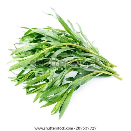 Tarragon herbs close up on white background - stock photo