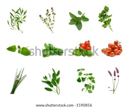 tarragon, thyme, mint, lavage, lemon-balm, basil, basil and cherry-tomatoes, tomatoes, chive, sage, oregano, lavender (from left to right) - stock photo