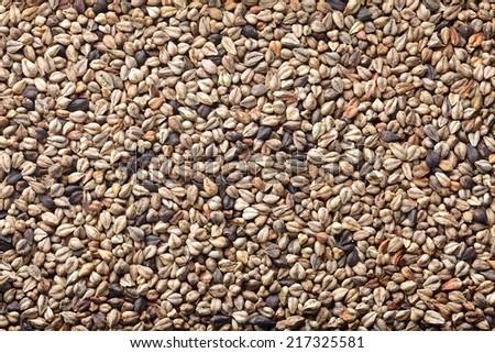 tartary buckwheat (bitter buckwheat) - stock photo
