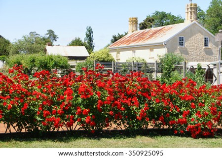 tasmania convict national rose garden world heritage site - stock photo