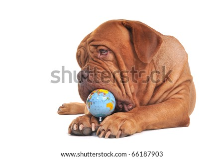 Tasting the world concept. Dog with globe. - stock photo