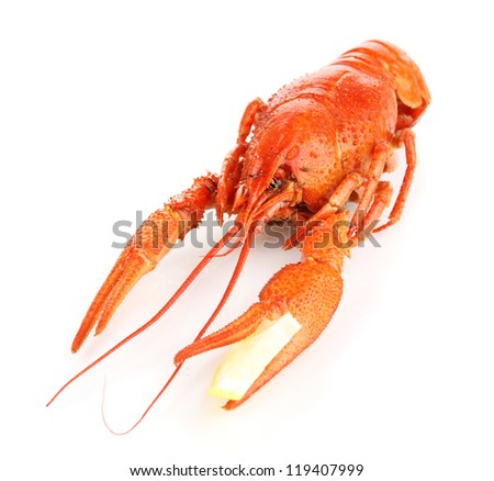 Tasty boiled crayfish with lemon isolated on white - stock photo