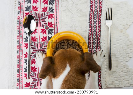 Tasty food for dogs. School of good manners in the Ukrainian style - stock photo