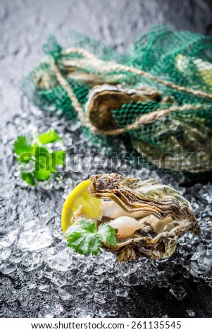 Tasty oyster in shell on black rock ready to eat - stock photo