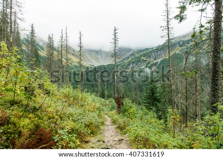Tatra mountain forest  in Slovakia covered with clouds. autumn colors.