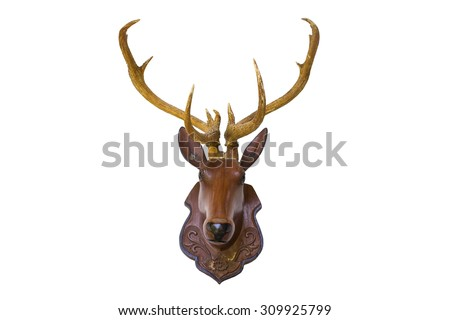 taxidermy. head deer isolated with  Background - stock photo