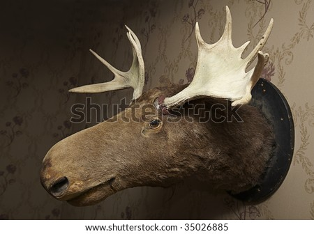 Taxidermy moose head on wallpaper in a livingroom - stock photo