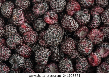 Tayberry a hybrid of raspberries and blackberries - stock photo