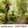 Te Urewera Treks.   Temperate rain forest with  Fern trees, Te Urewera National Park, North Island, New Zealand - stock photo