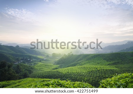 Tea Farm sunrise scenery from hill top of Cameron Highland, Malaysia. Amazing hill wave look and terrace background - stock photo